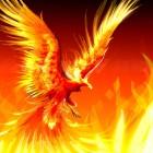 Fire Phoenix Tattoo Designs